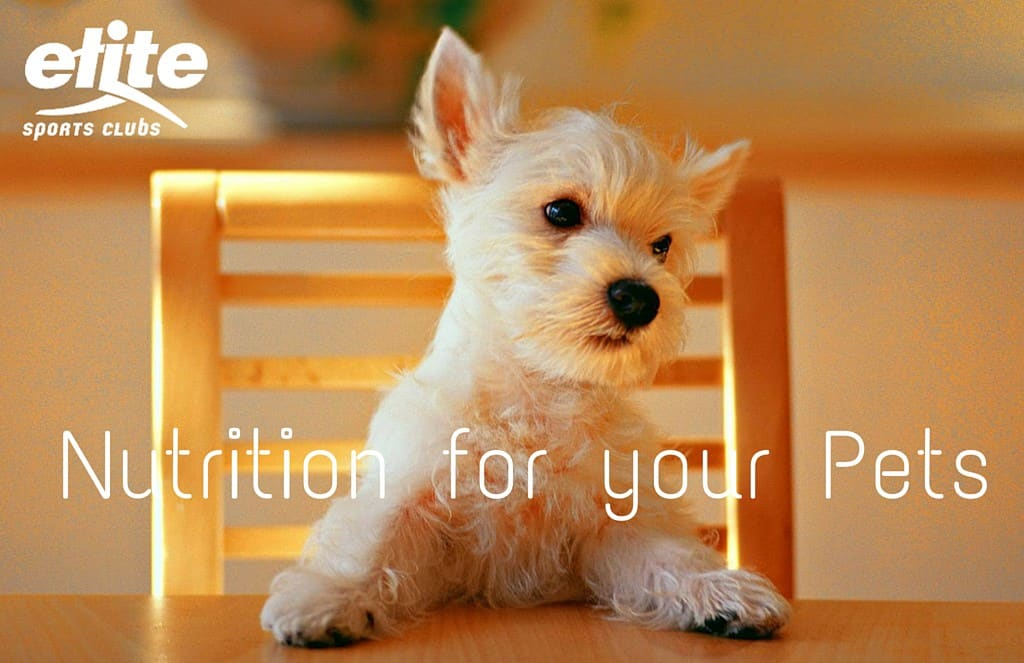 Nutrition For Your Pets