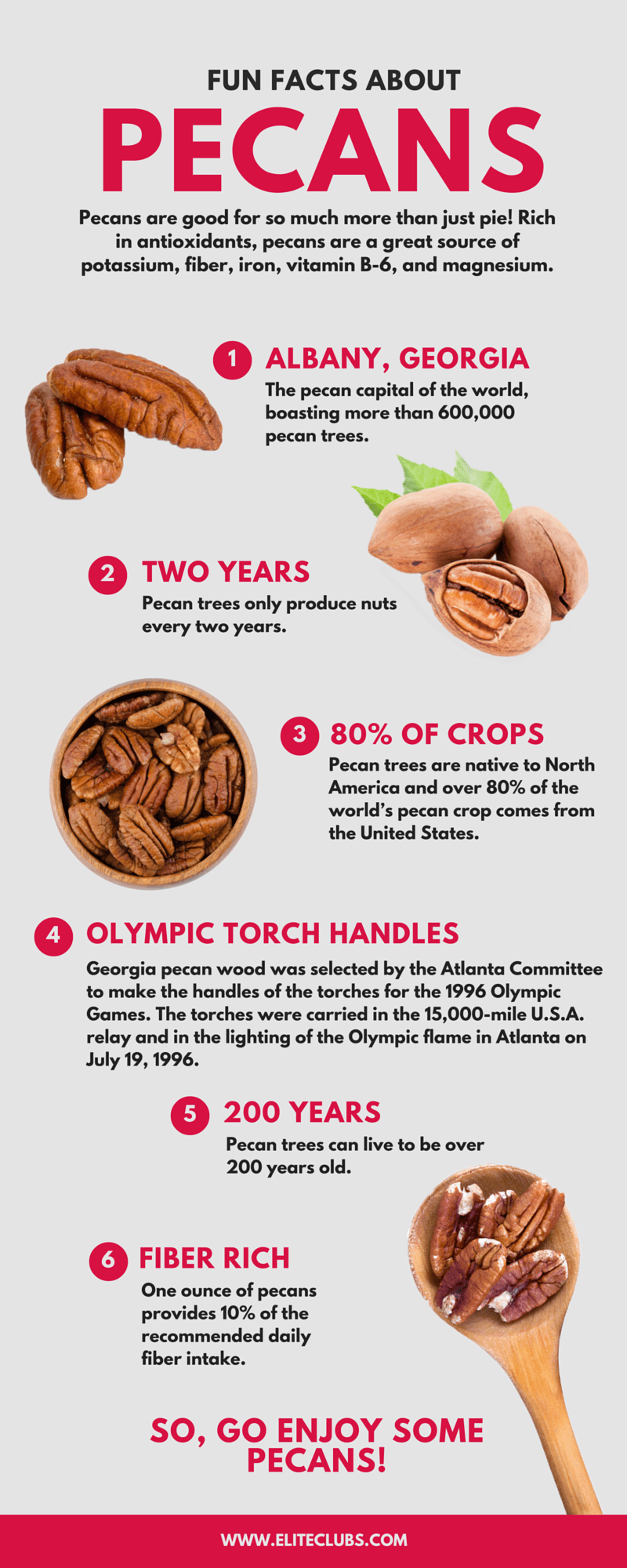 Fun Facts About Pecans Infographic