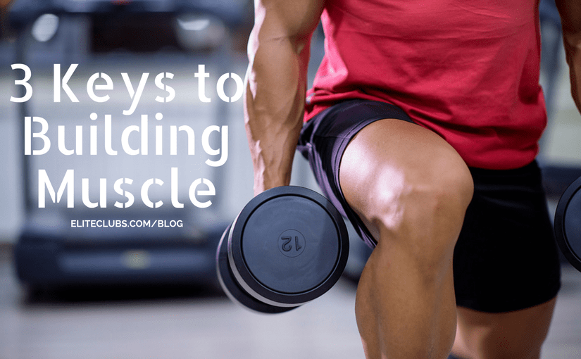 3 Keys to Building Muscle