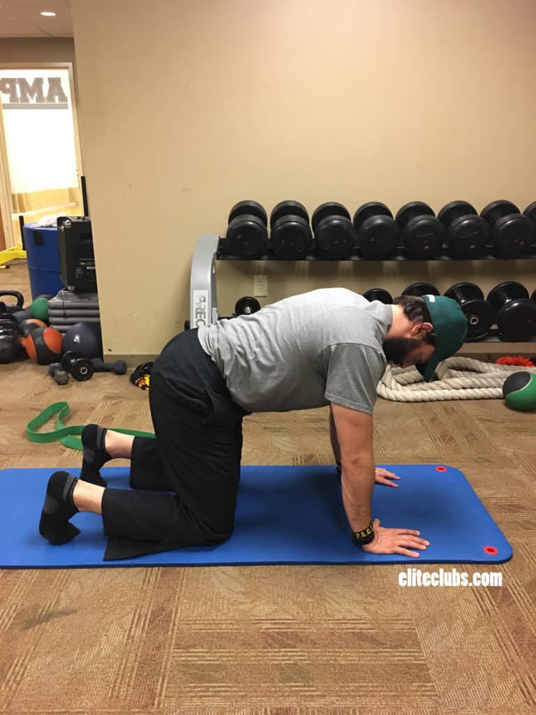 Runner Core Exercises - Bird Dog 1