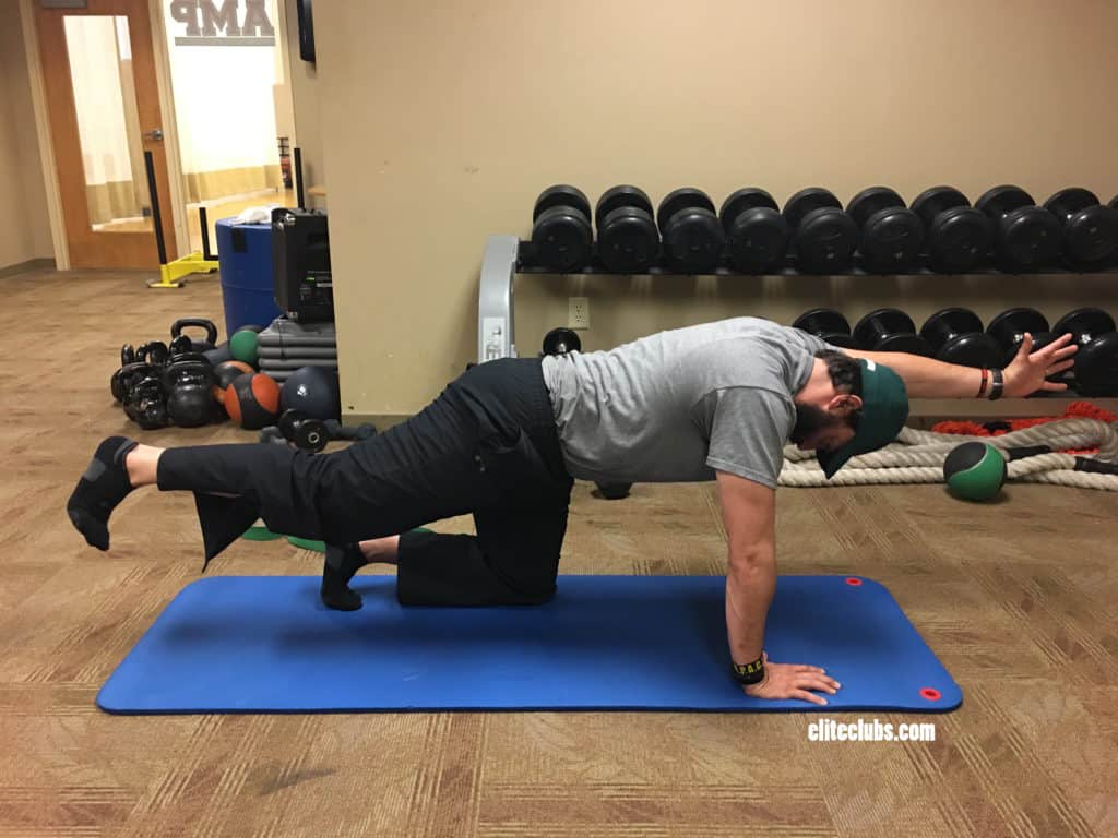 Runner Core Exercises - Bird Dog 3